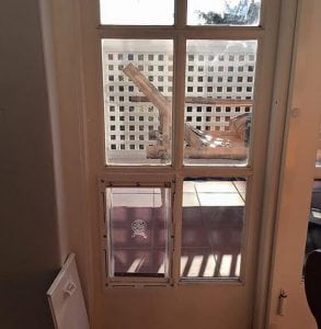 Security pet door