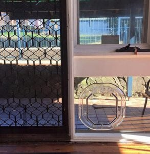 Screen Cat Doors