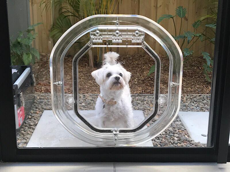 Glass Dog Doors