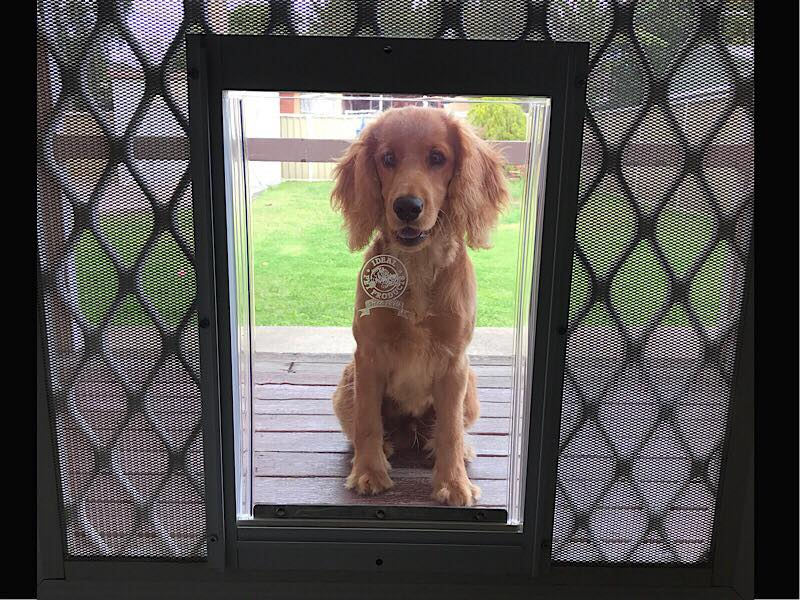 Screen Dog Doors