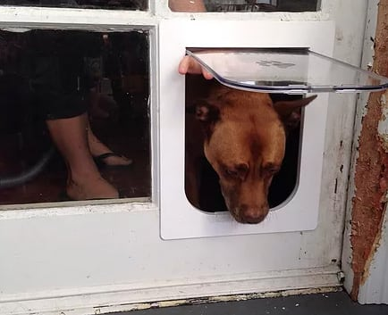 French Doors Installation With Dog Door Sydney Paws Pet Door
