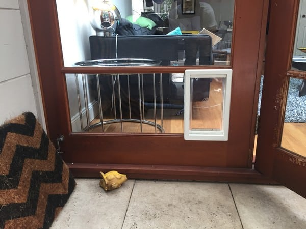 dog-door-french-door (35)