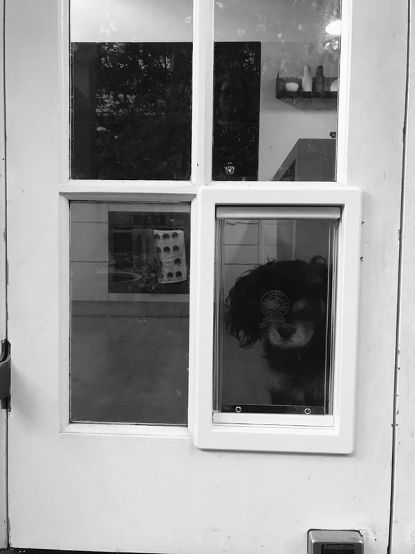 dog-door-french-door (8)