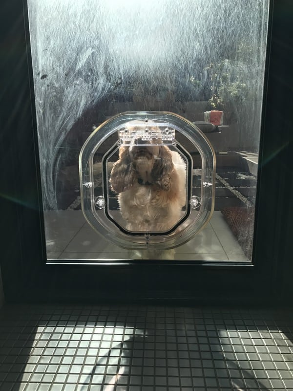 glass-door-dogdoor (11)