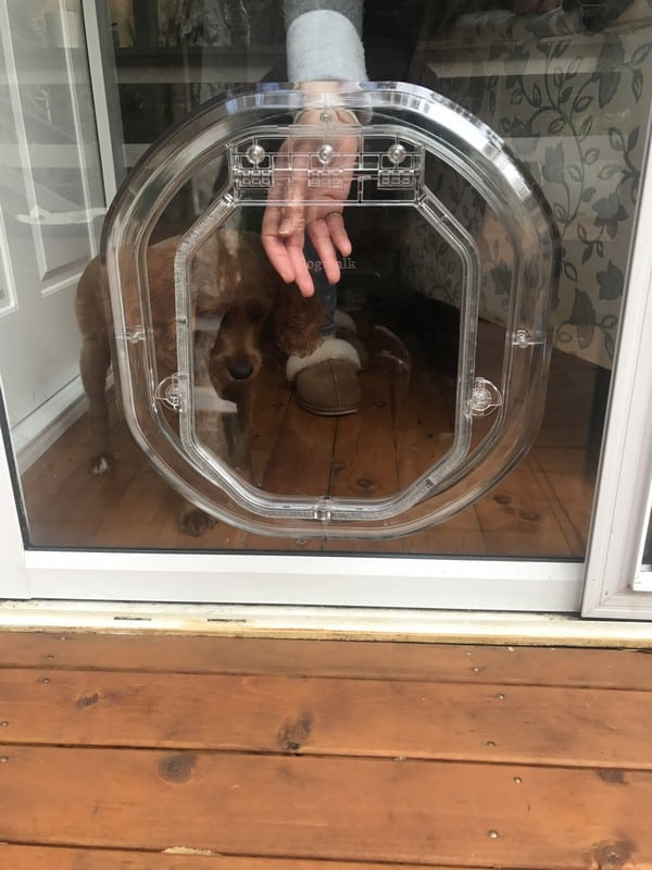glass-door-dogdoor (12)