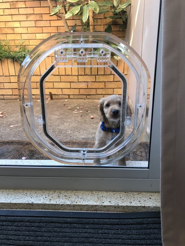 glass-door-dogdoor (14)