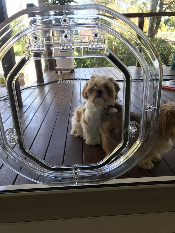 glass-door-dogdoor (17)