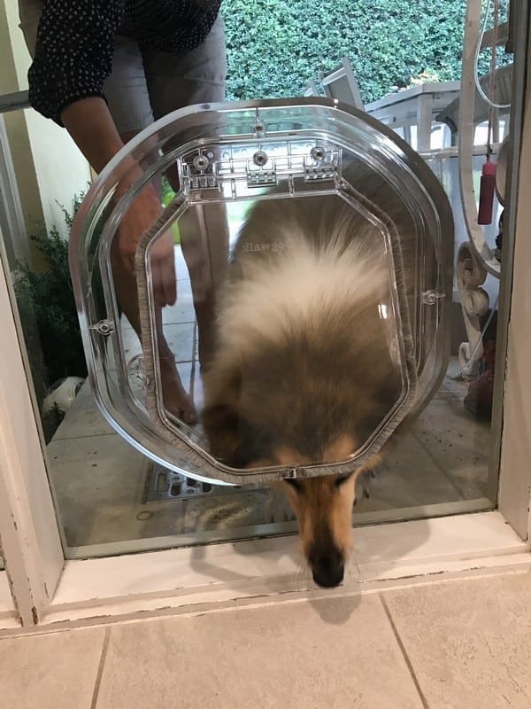 glass-door-dogdoor (2)