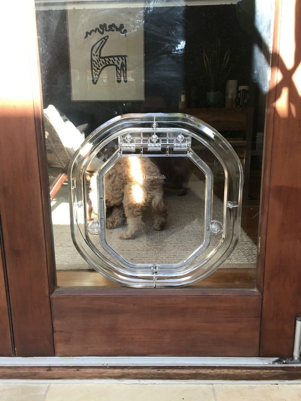 glass-door-dogdoor (30)