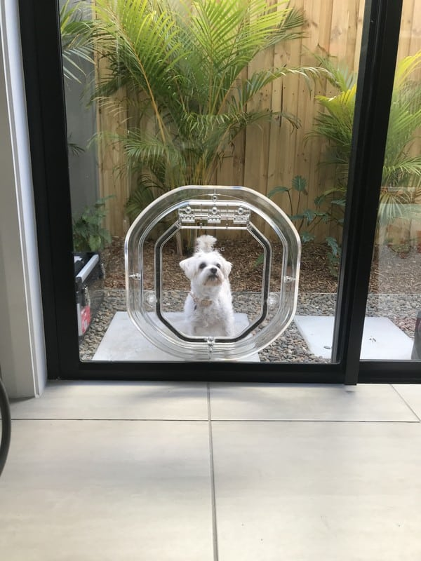 glass-door-dogdoor (35)