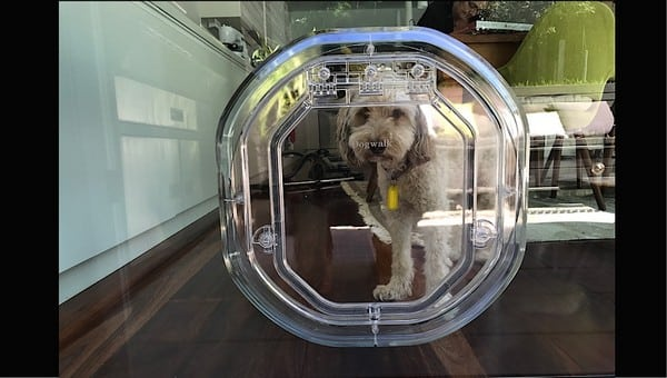 glass-door-dogdoor (4)