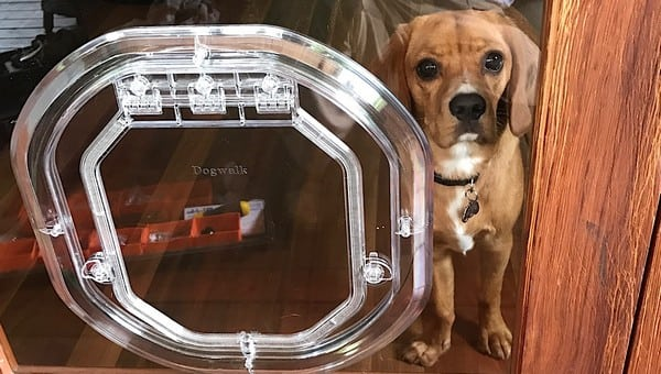 glass-door-dogdoor (5)