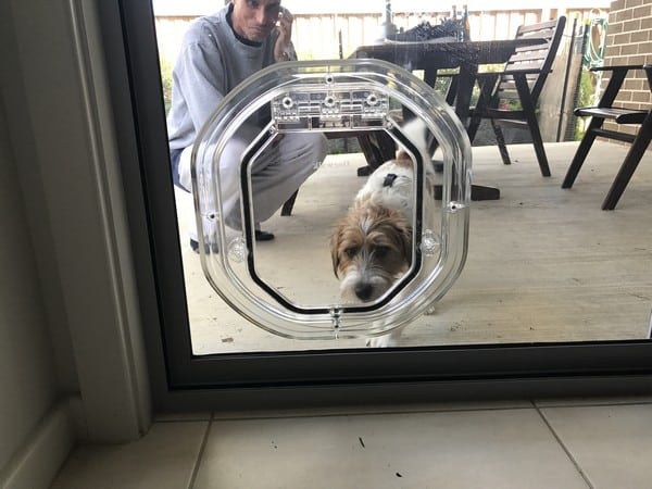 glass-door-dogdoor (7)