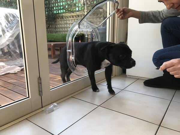 glass-door-dogdoor (8)