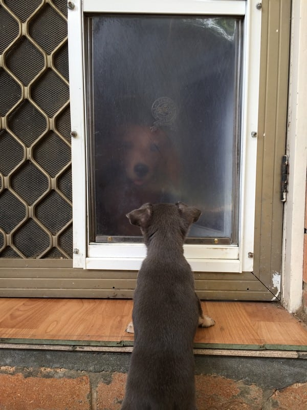 security-screen-petdoor (26)