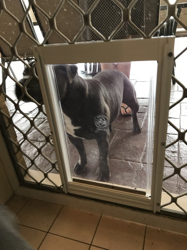 security-screen-petdoor (5)