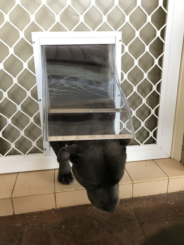 security-screen-petdoor (6)